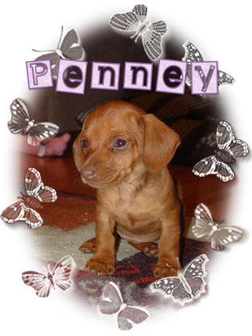 Penny2resized