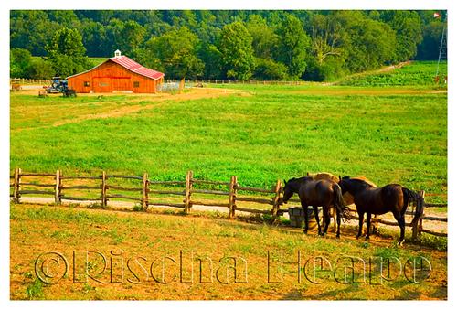 Horses_barn_wm_tut_resize